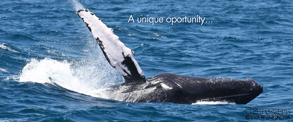 Samana Whale Watching Tour for Cruise Ship.