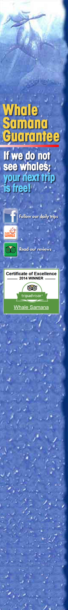 Samana Dominican Republic Whale Watching Tour for Cruise Ship - Whale Samana with Kim Beddall.